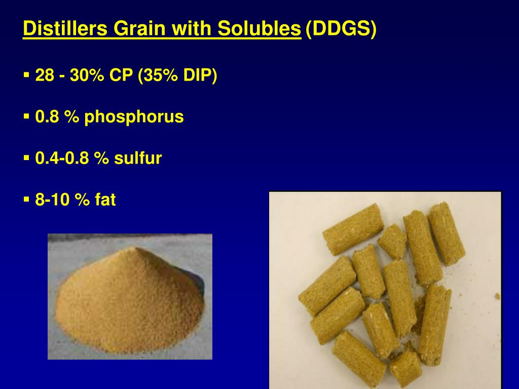 Distillers Grain with Solubles