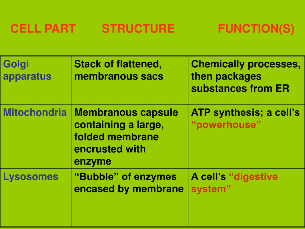 CELL PART      	STRUCTURE             FUNCTION(S)