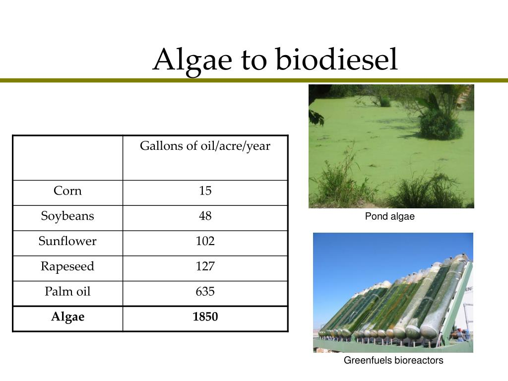 how to create biodiesel from algae
