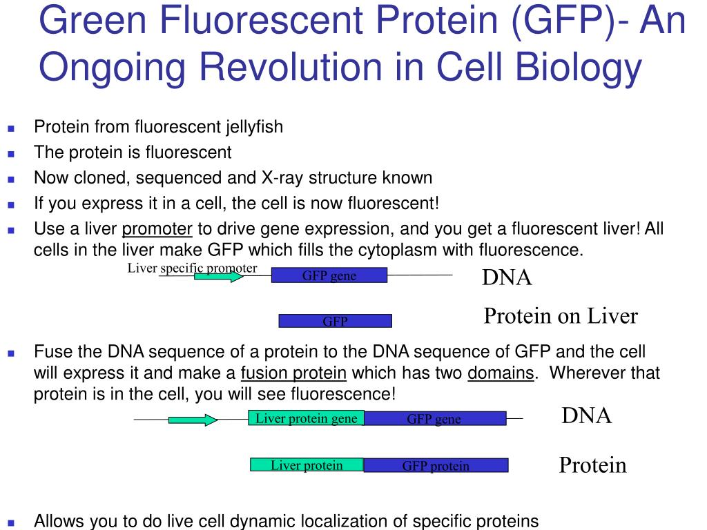 Green Fluorescent Protein (GFP)- An Ongoing Revolution in Cell Biology