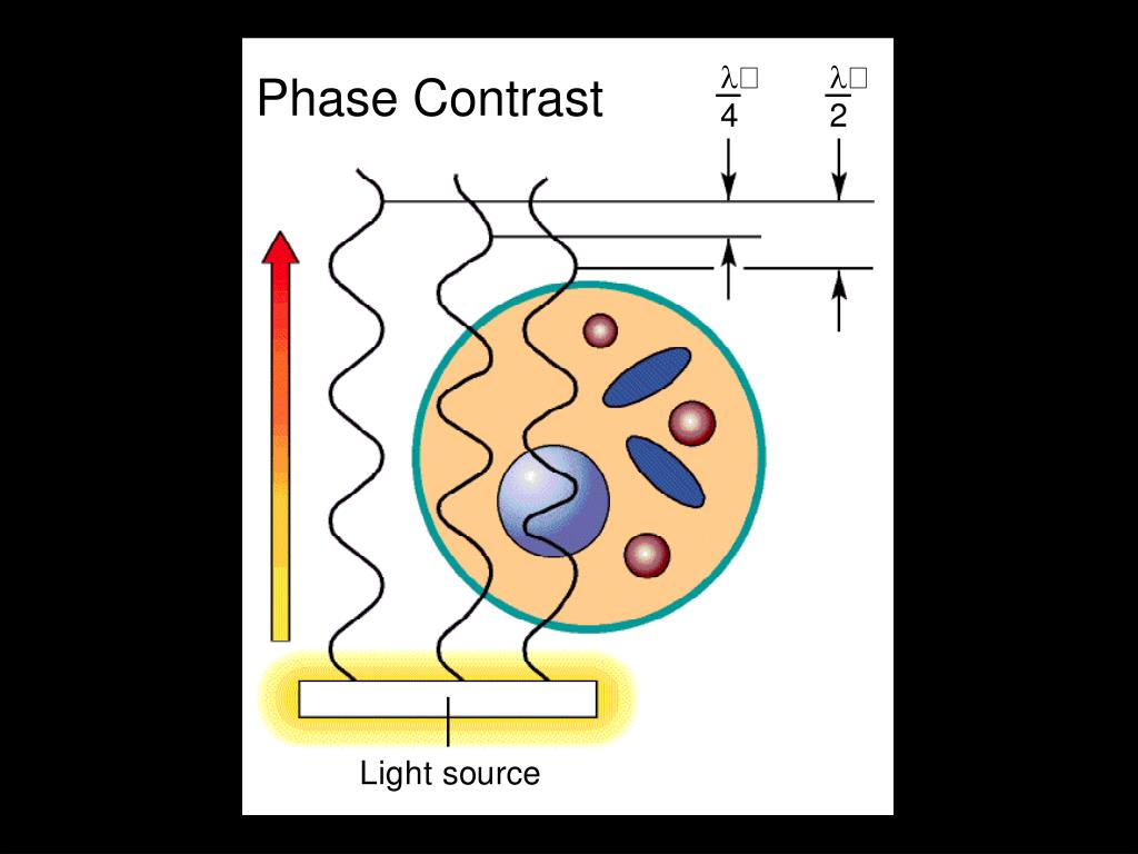 Phase Contrast