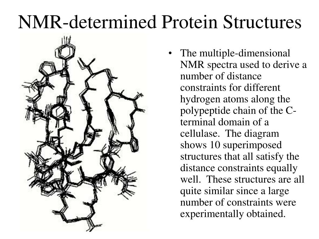 NMR-determined Protein Structures
