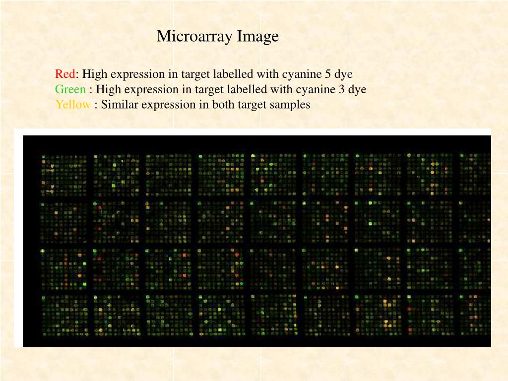 Microarray Image