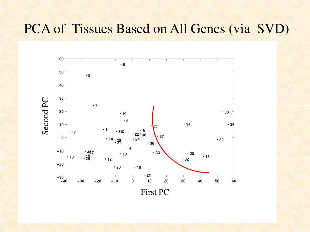 PCA of  Tissues Based on All Genes (via  SVD)