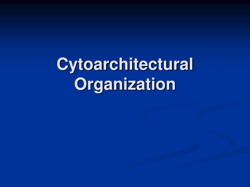 Cytoarchitectural Organization