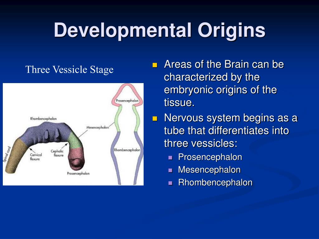 Developmental Origins