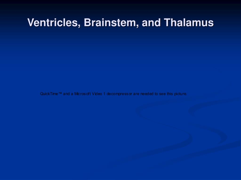 Ventricles, Brainstem, and Thalamus