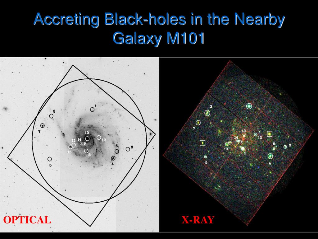 Accreting Black-holes in the Nearby Galaxy M101