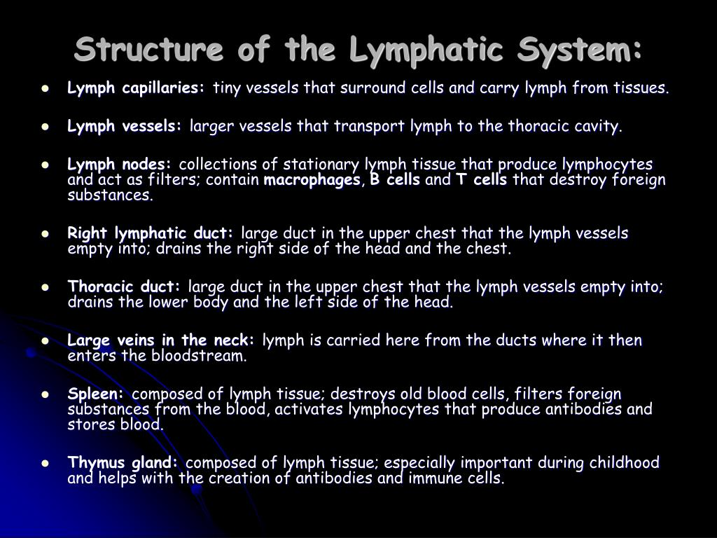 Structure of the Lymphatic System: