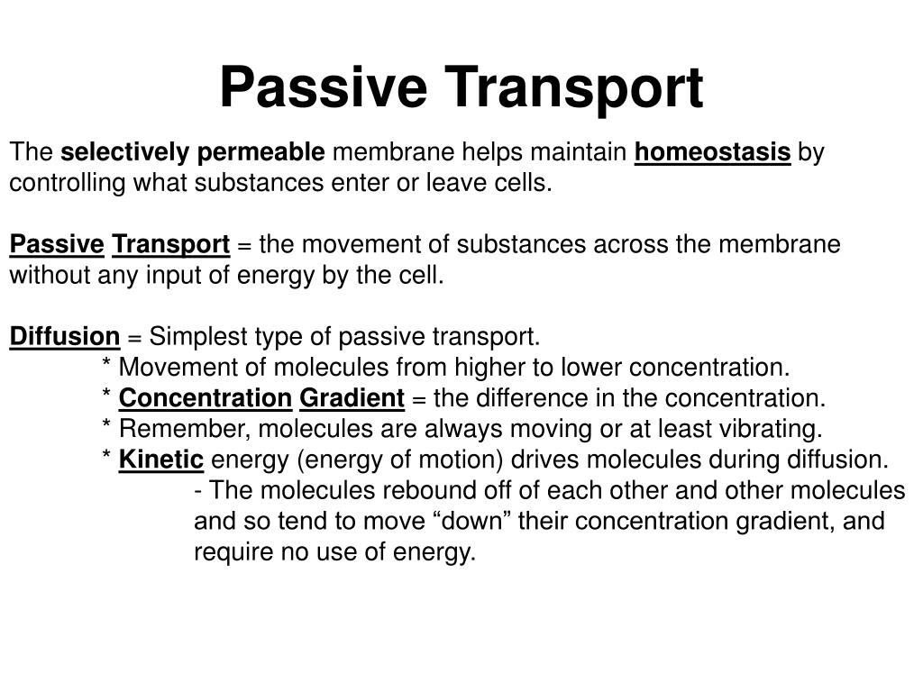 PPT - Chapter Five Homeostasis and Transport 5.1 Passive ...  Example Of Passive Transport