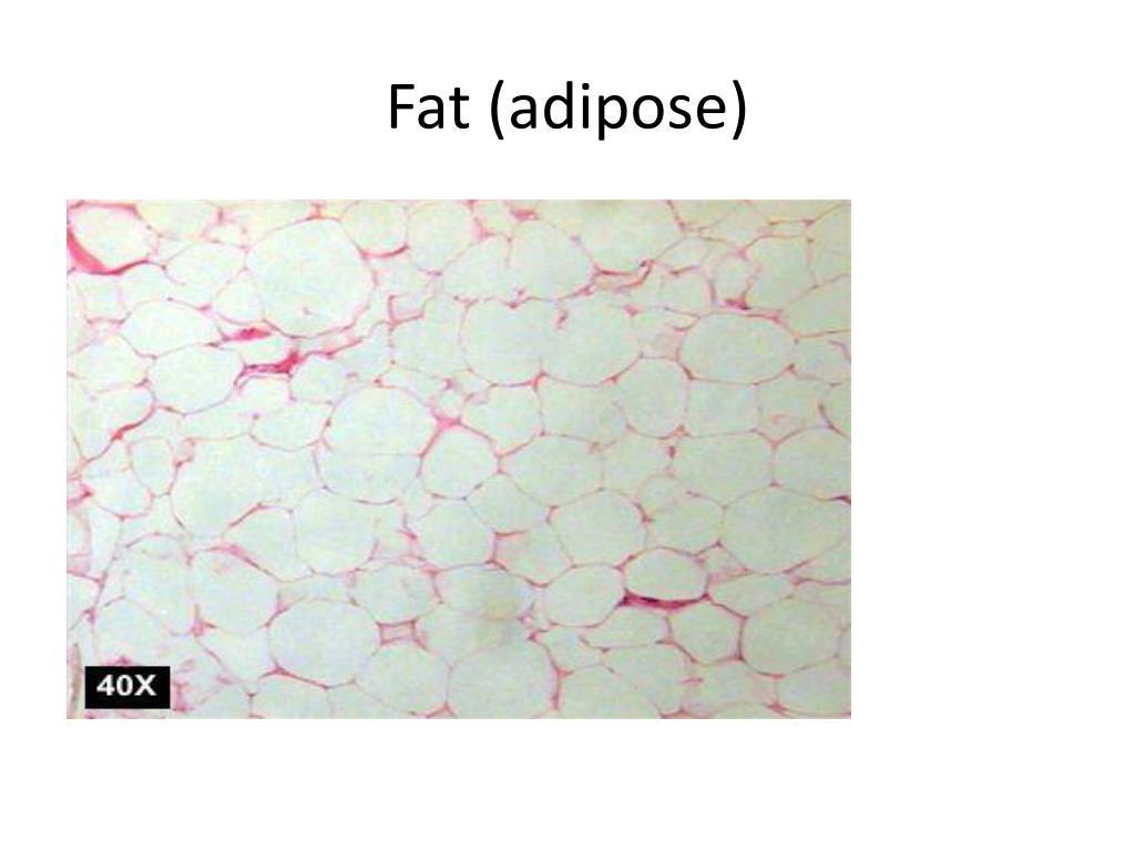 Fat (adipose)