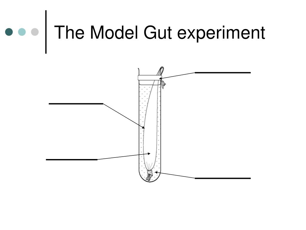 The Model Gut experiment