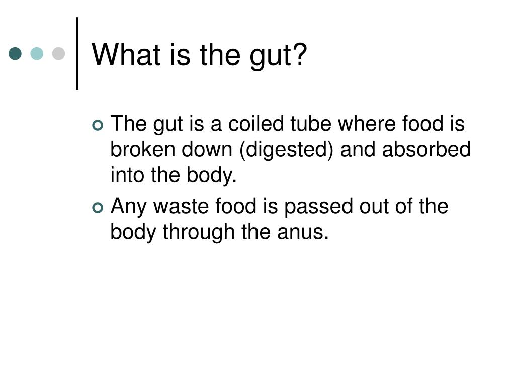 What is the gut?