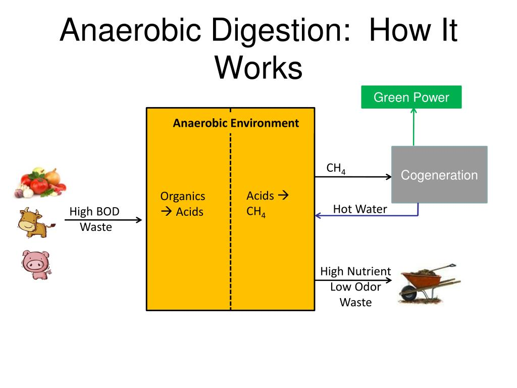 Anaerobic Digestion:  How It Works