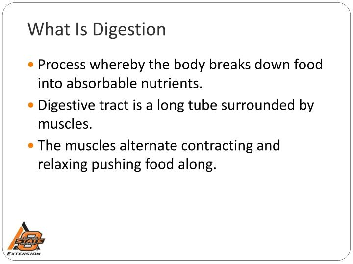 What is digestion l.jpg