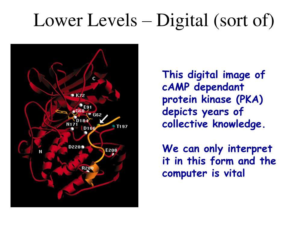 Lower Levels – Digital (sort of)