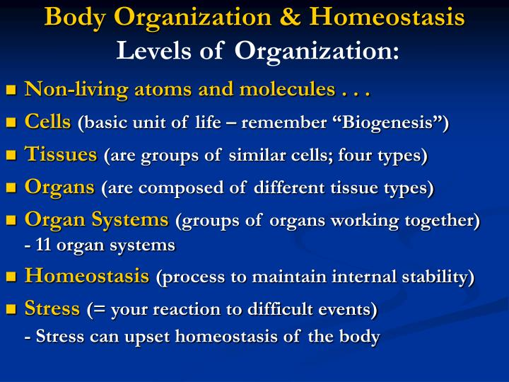 Body Organization & Homeostasis