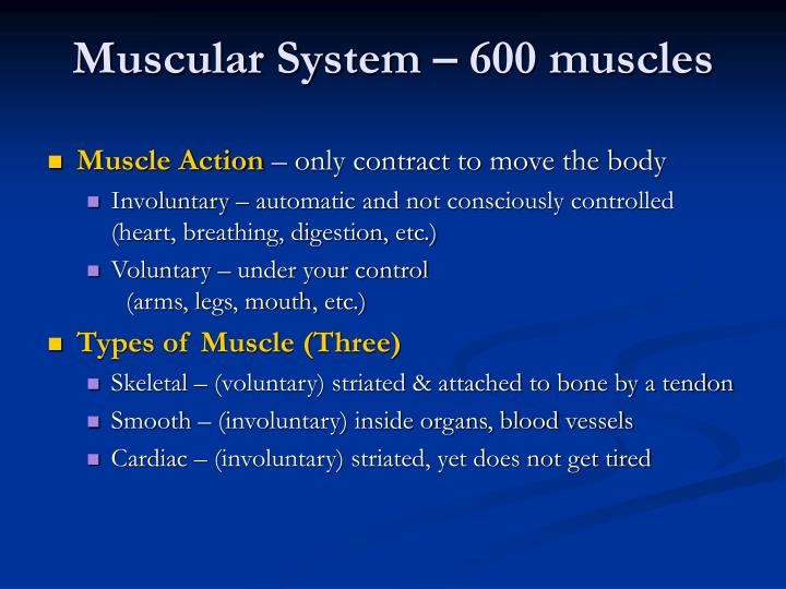 Muscular System – 600 muscles