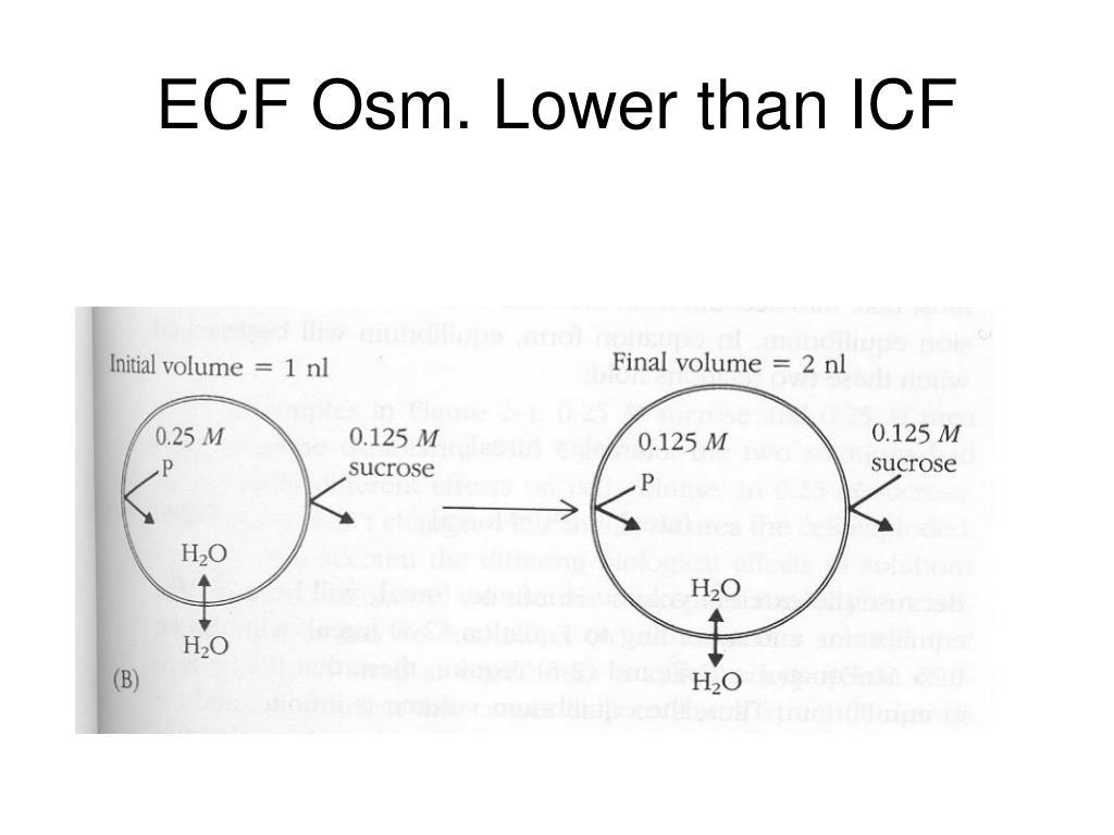 ECF Osm. Lower than ICF