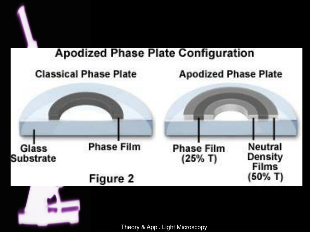 Theory & Appl. Light Microscopy