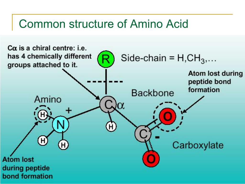 Common structure of Amino Acid