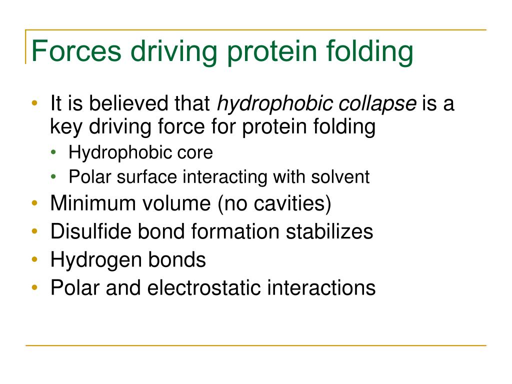 Forces driving protein folding