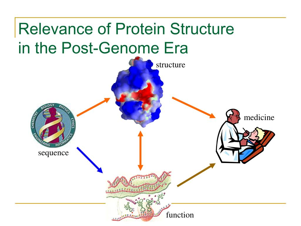 Relevance of Protein Structure