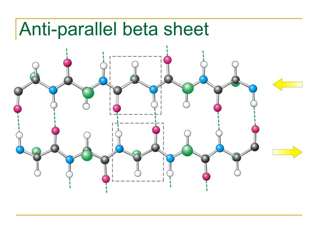 Anti-parallel beta sheet