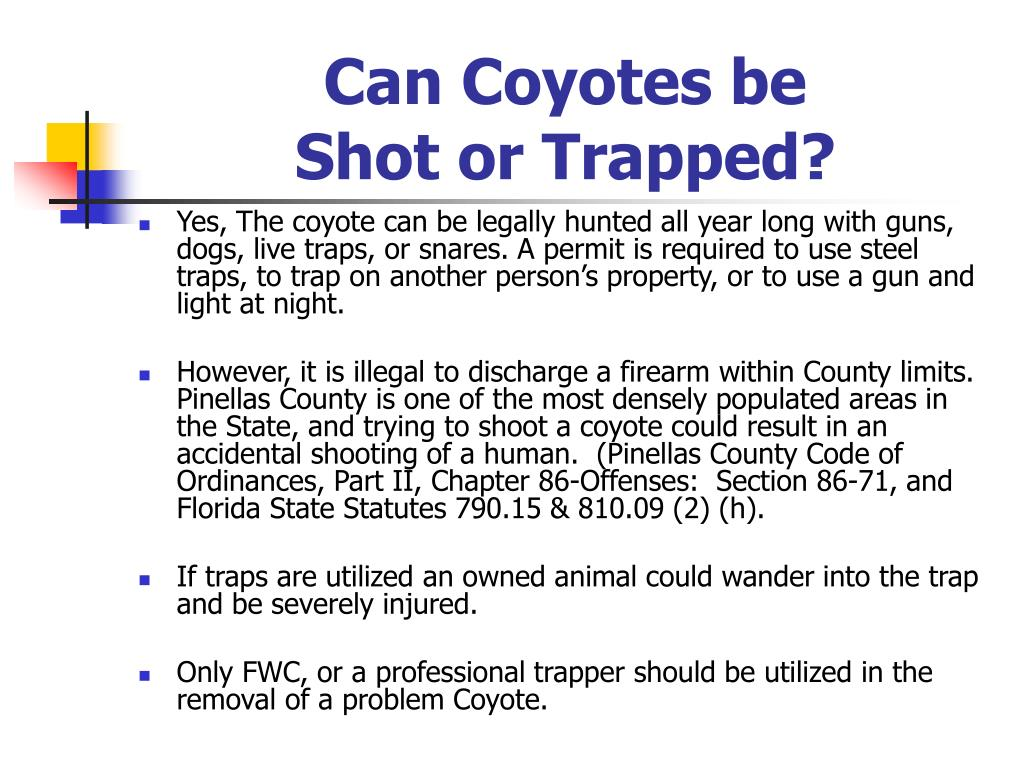 Can Coyotes be