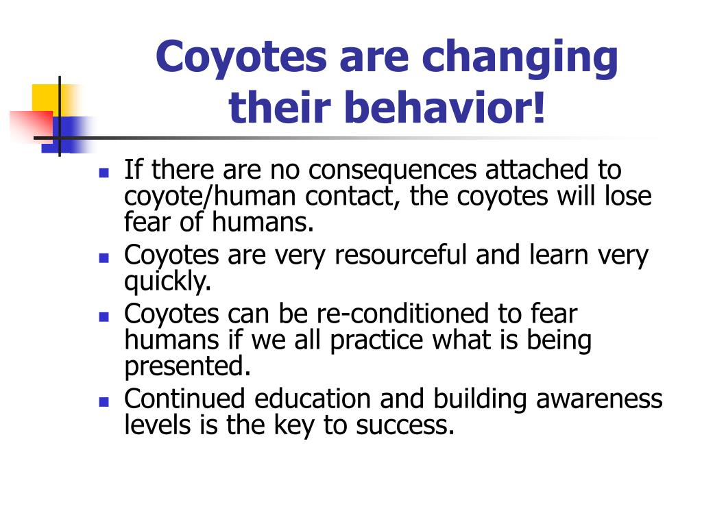 Coyotes are changing