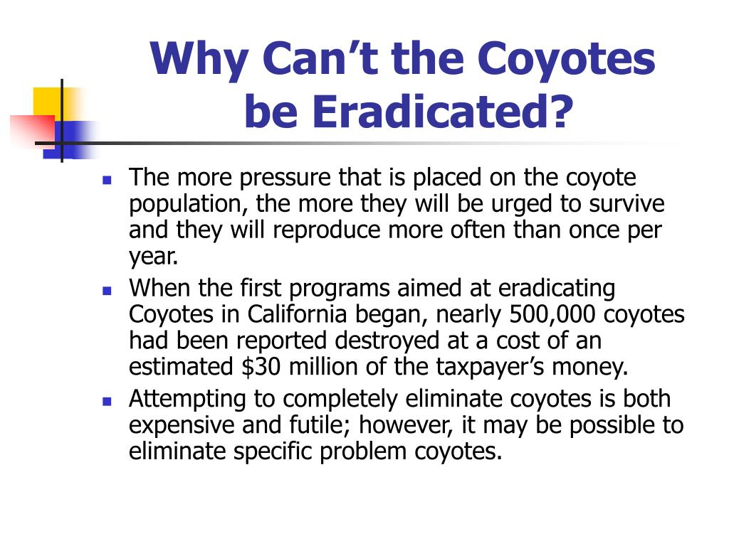 Why Can't the Coyotes
