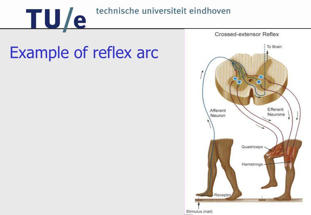 Example of reflex arc
