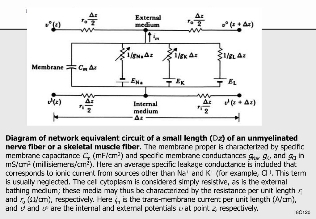 Diagram of network equivalent circuit of a small length (