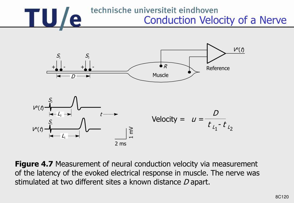 Conduction Velocity of a Nerve