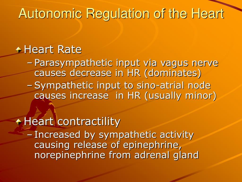 Autonomic Regulation of the Heart