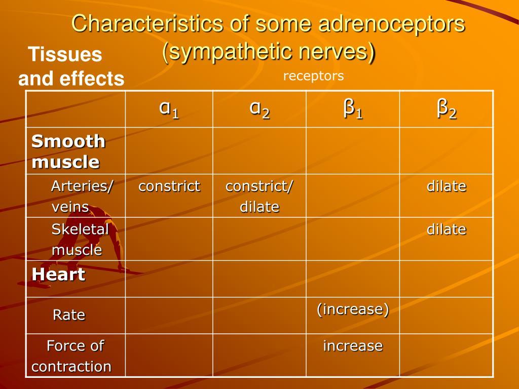 Characteristics of some adrenoceptors (sympathetic nerves)