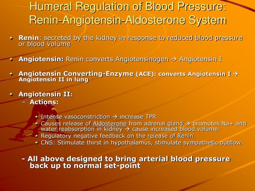 Humeral Regulation of Blood Pressure: Renin-Angiotensin-Aldosterone System