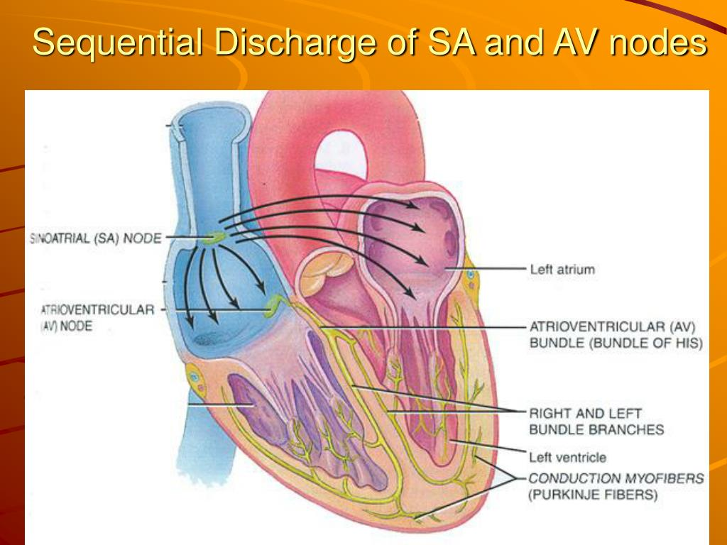 Sequential Discharge of SA and AV nodes