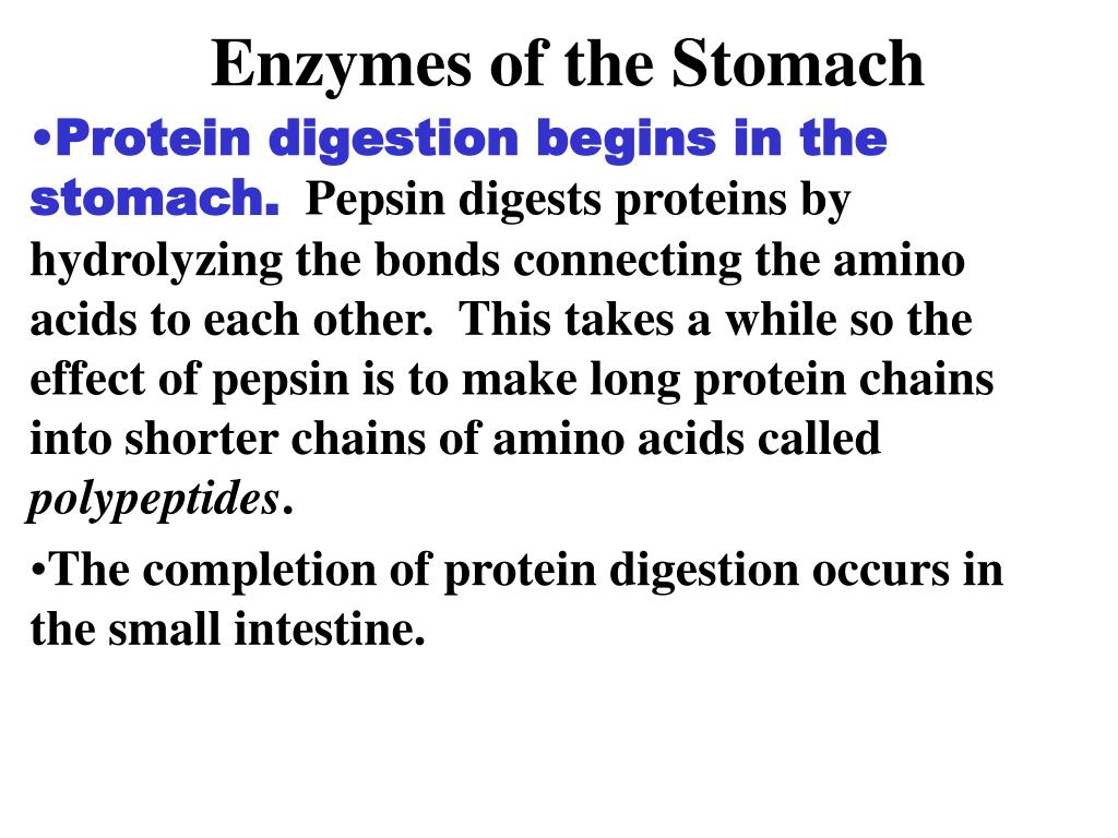 Enzymes of the Stomach
