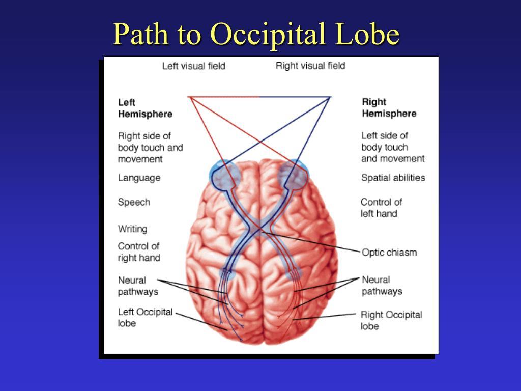 Path to Occipital Lobe