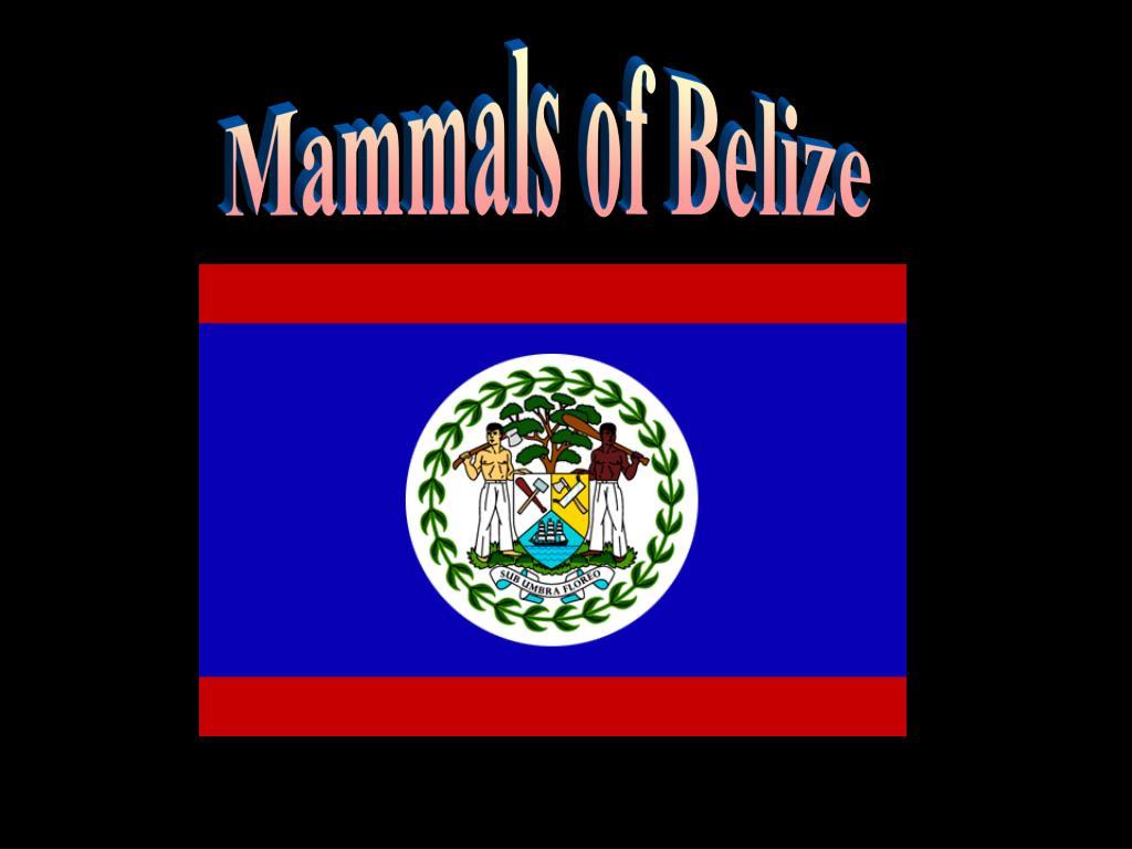 Mammals of Belize