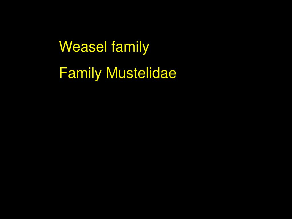Weasel family