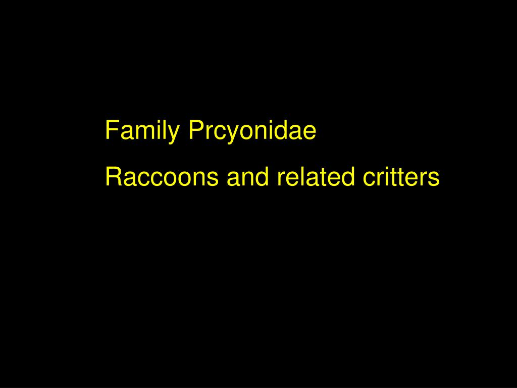 Family Prcyonidae