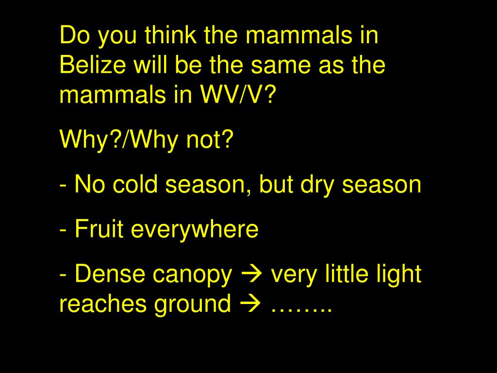 Do you think the mammals in Belize will be the same as the mammals in WV/V?