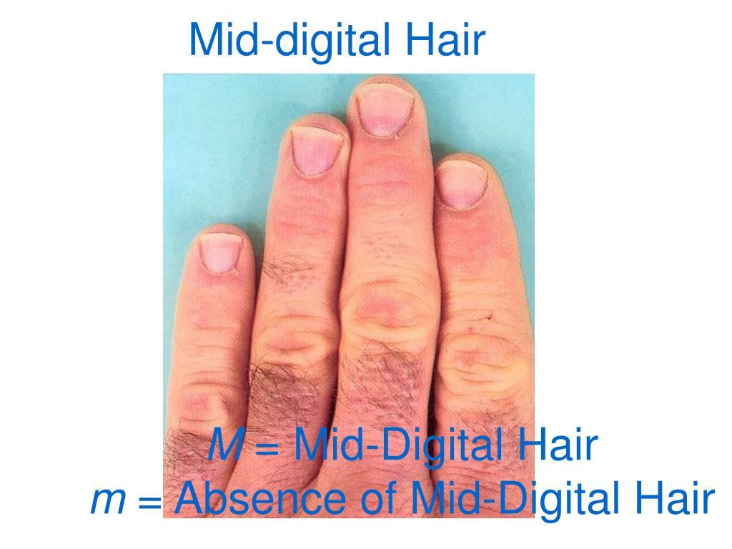 Mid-digital Hair