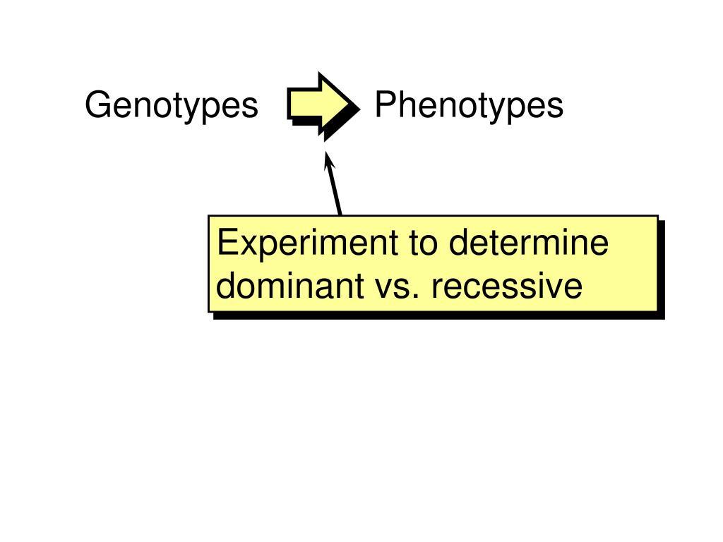 Genotypes          Phenotypes