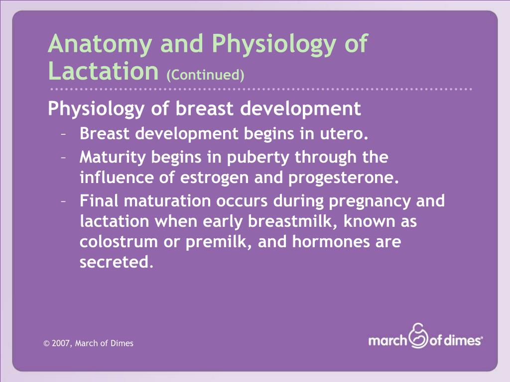 Anatomy and Physiology of Lactation