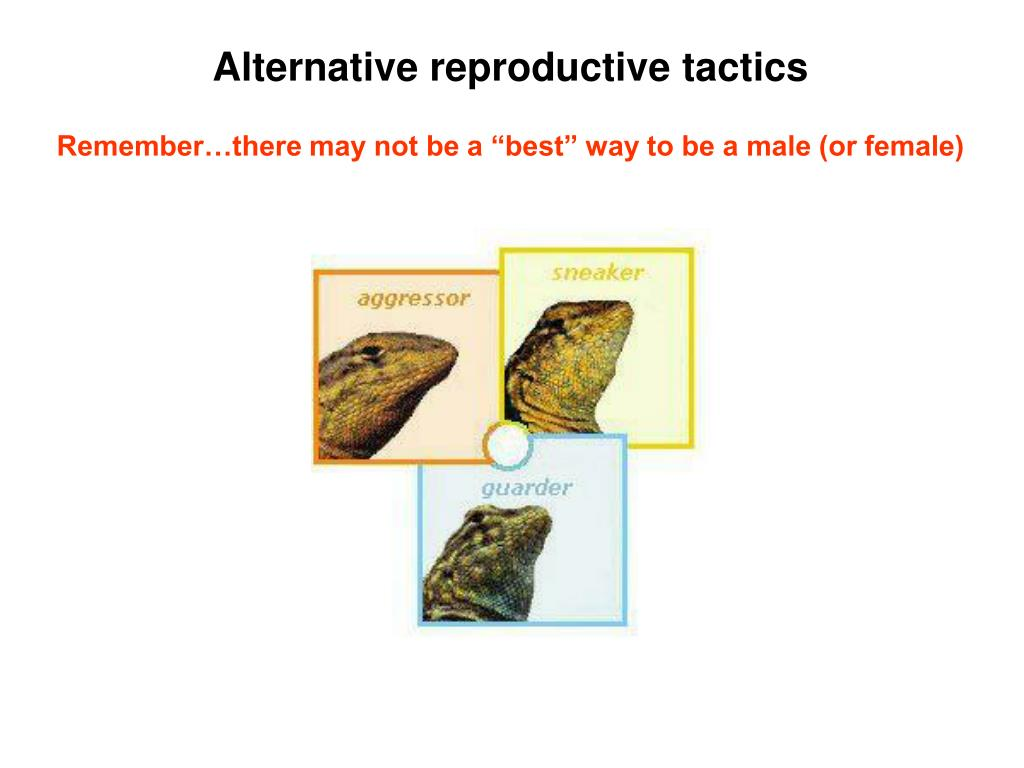 Alternative reproductive tactics