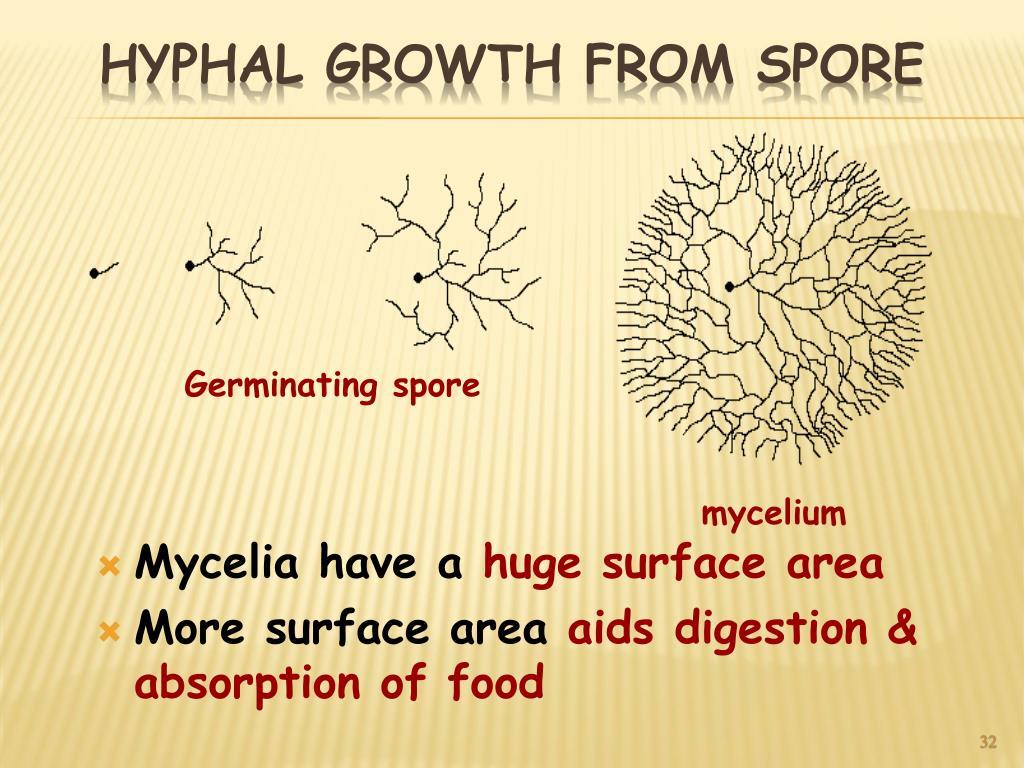 Mycelia have a
