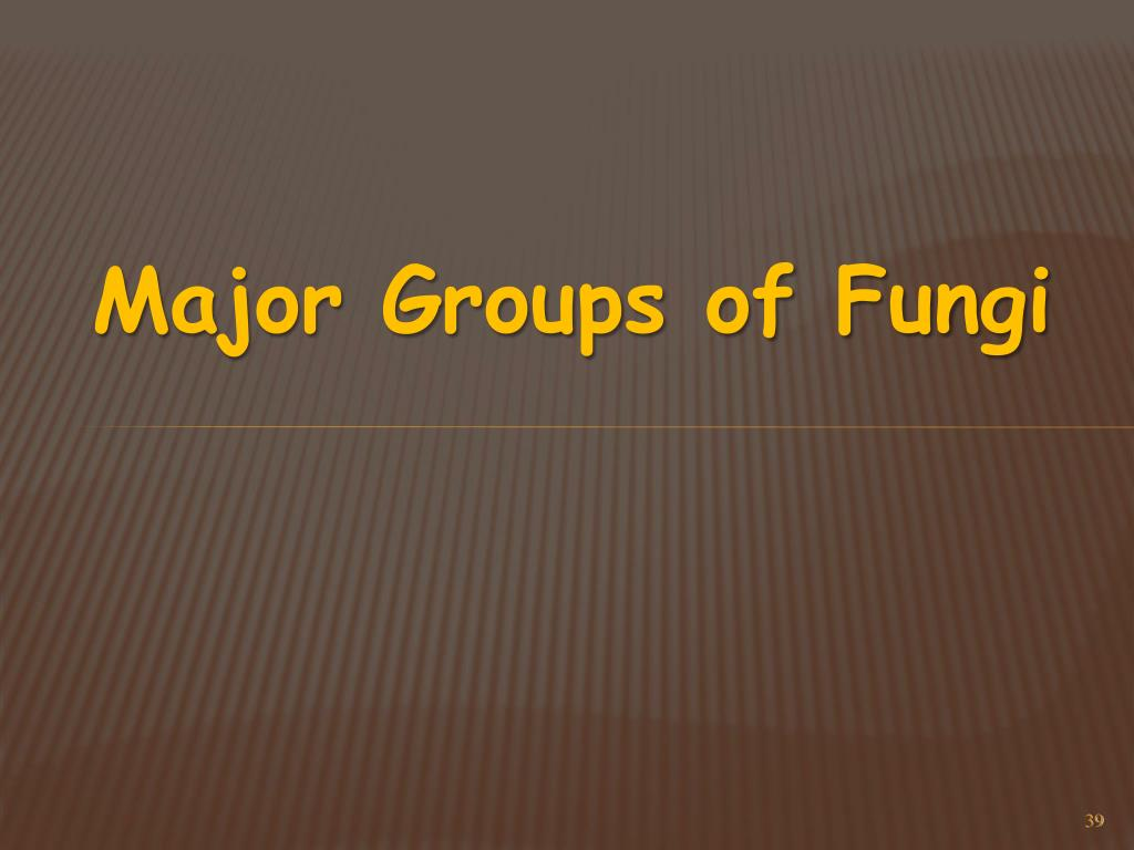 Major Groups of Fungi